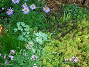 Low maintenance landscaping includes ground covers like sedum