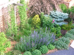 smaller shrubs and trees are low maintenance landscaping heroes